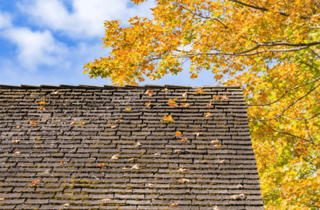 colorful leaves on roof